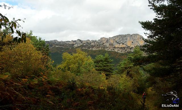 Ruta de los Castaños Centenarios en la Metrópoli Verde 28