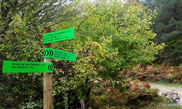 Ruta de los Castaños Centenarios en la Metrópoli Verde 10