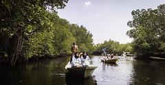 Exploring Mangrove Forests @Nusa Lembongan