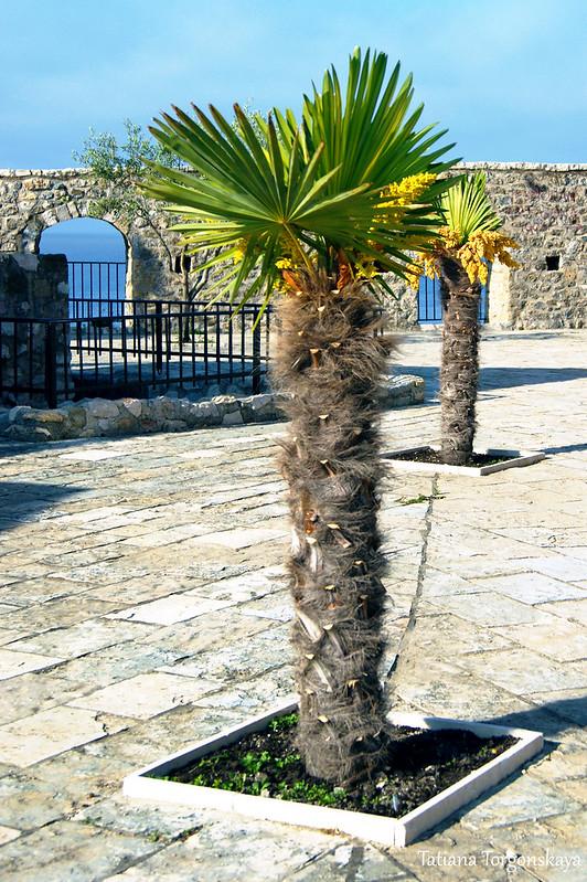 Пальмы в Старом городе