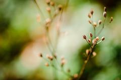 Vertrocknetes im Herbst