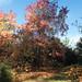 Biddulp_Gardens_ 24 05-11-17.jpg