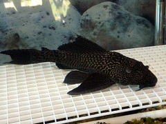 Fish At The Nature Center.