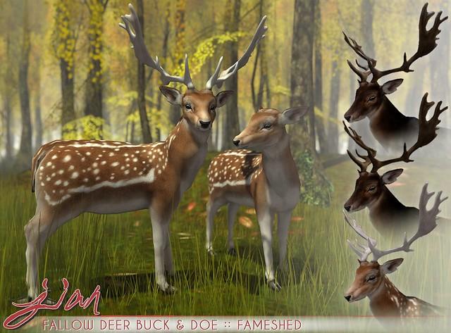 JIAN Fallow Deer Buck & Doe ( FaMESHed )