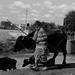 IMG_6534 by Aftab Nazeer