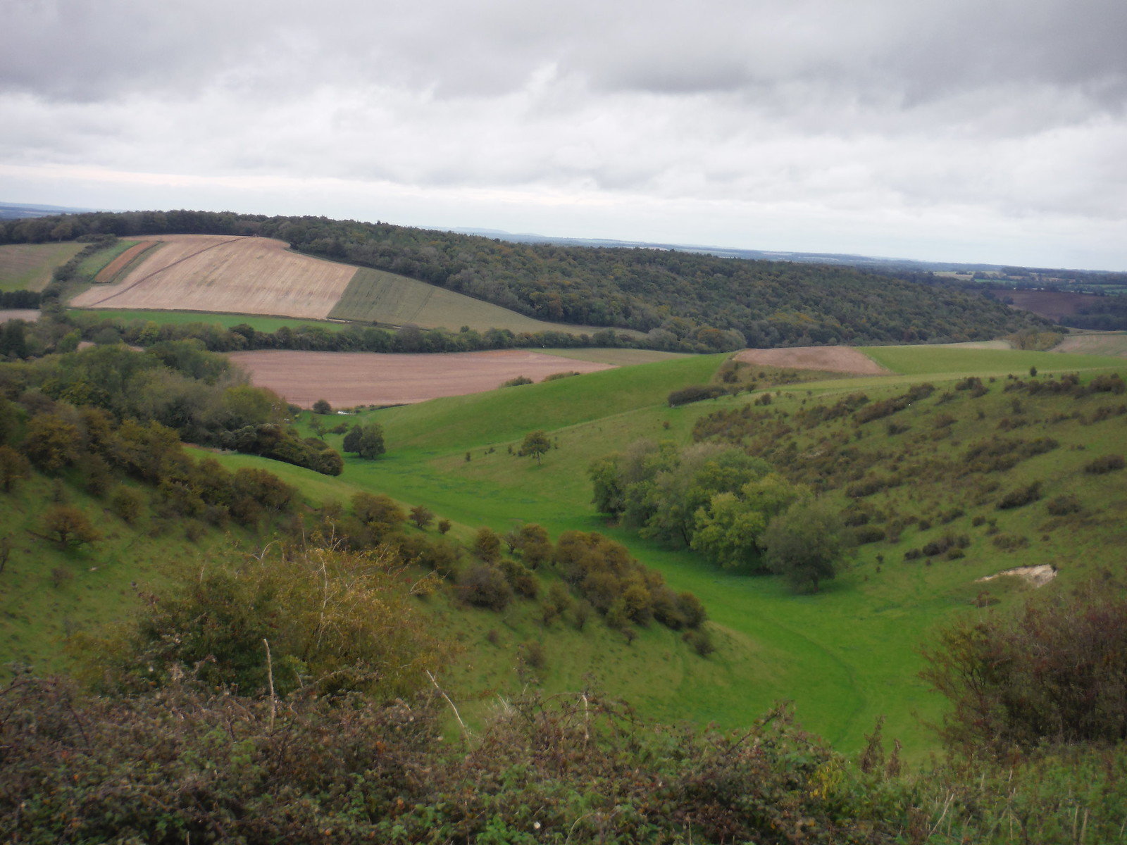 Long Down, from Wether Down SWC Walk 183 - South Downs Way Section 2: West Meon to Petersfield
