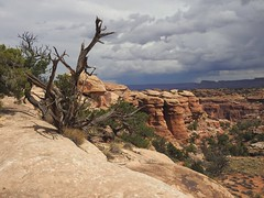 7223ex Canyonlands-- Needles area