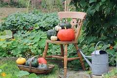 Pumpkin and Squash October 2017