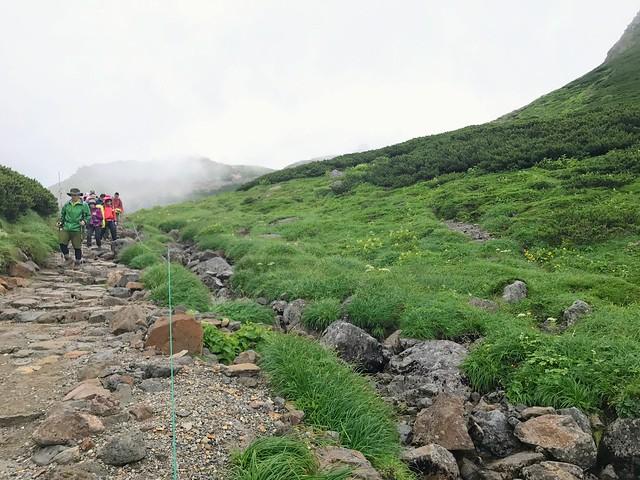 乗鞍岳 お花畑 登山道