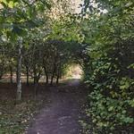 Katherine's Wood Balsall Common Warwickshire
