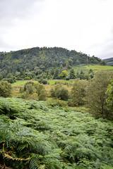 Green green, Glendalough