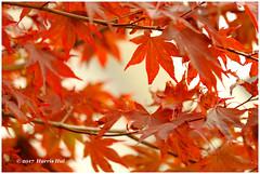 Autumn Is For Mono Color - Cranbrook XP7255e