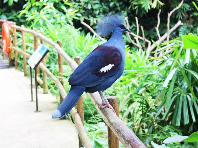 jurong bird park Gradini si Parcuri din Singapore 4