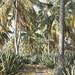 Small photo of Path through sisal plantation. Agave americana