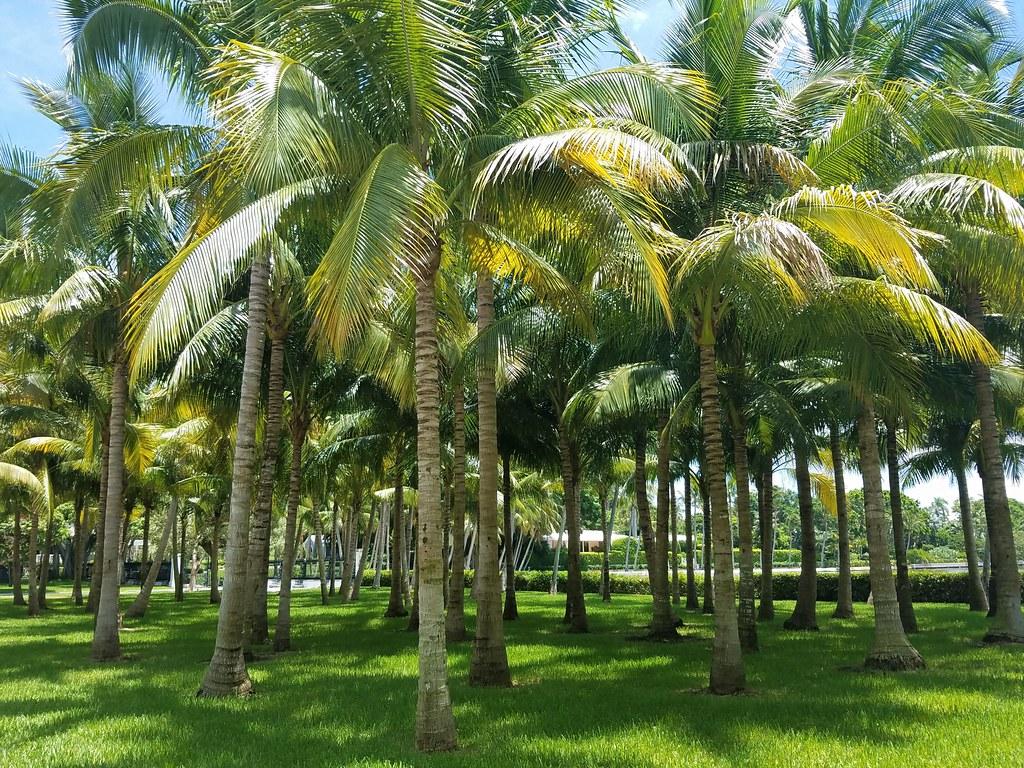 South Cove Islands Florida Tripcarta