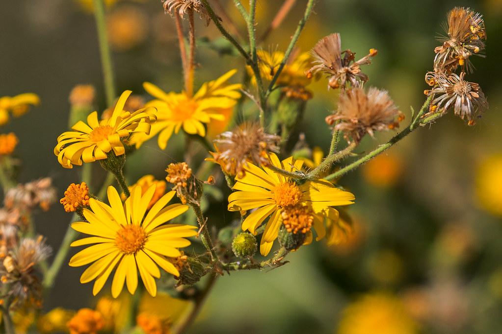 Wild-Flower-12-7D2-100717