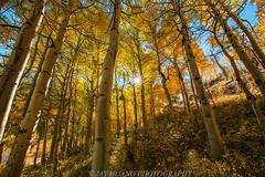 Step upto Autumn