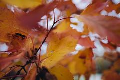 Fall Colors at Buffalo River State Park, Minnesota
