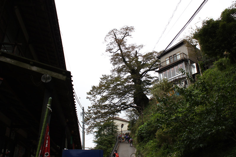 20111001_大岳山_0014