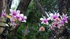 Остров Орхидей на Фиджи открывается для посетителей