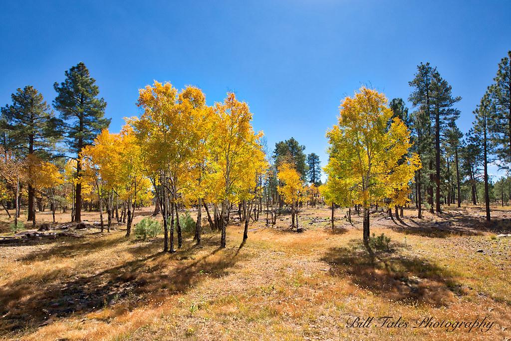 Naegelin Canyon Arizona Tripcarta