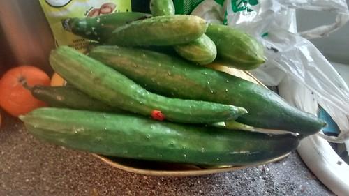 cucumbers Oct 17
