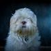 Dog-8982 by EB_Creation