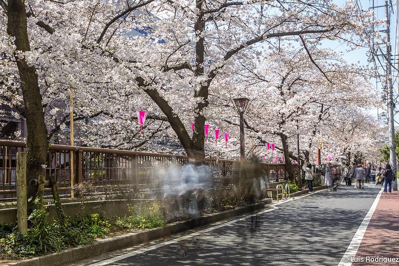 Naka-Meguro-Hanami-89