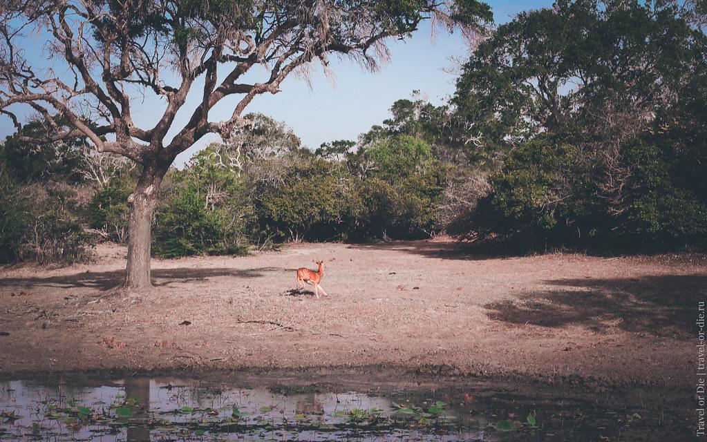 25.06-Yala-National-Park-Sri-Lanka-canon-1500px-025