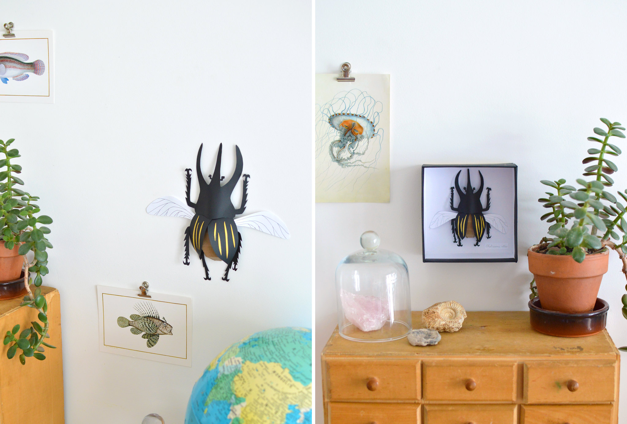 un scarab e en papier fa on cabinet de curiosit s les yeux en amande. Black Bedroom Furniture Sets. Home Design Ideas