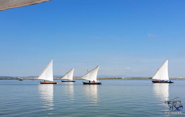 Paseo en barca por la Albufera de Valencia (9)