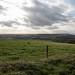 SDW: west to Barnsham Hill