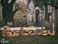 hive // basket of mini pumpkins sets | FLF