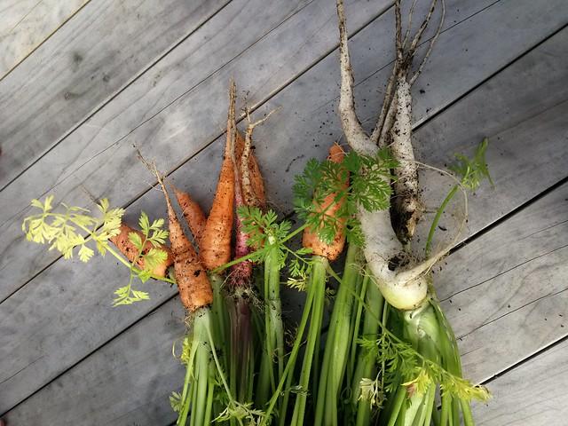 12 individual carrots