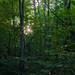 Sourlands Trails
