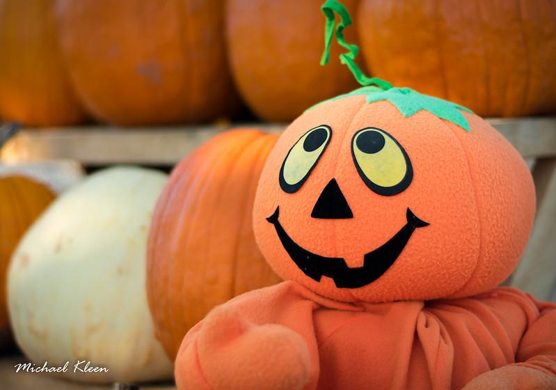 Autumn Harvest 7
