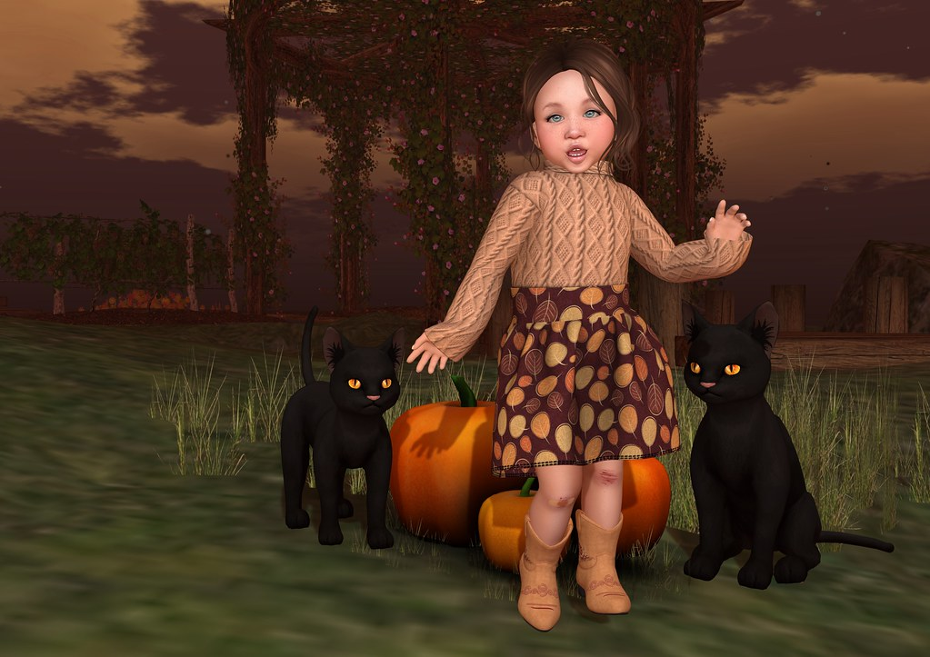 Pumpkins, Kitties and Cuteness 2_003b
