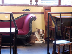 Bailey in Bar Fringe