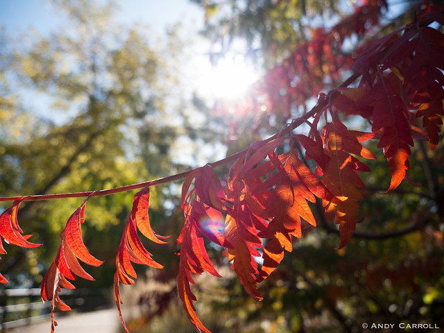 Fall, Millennium Park