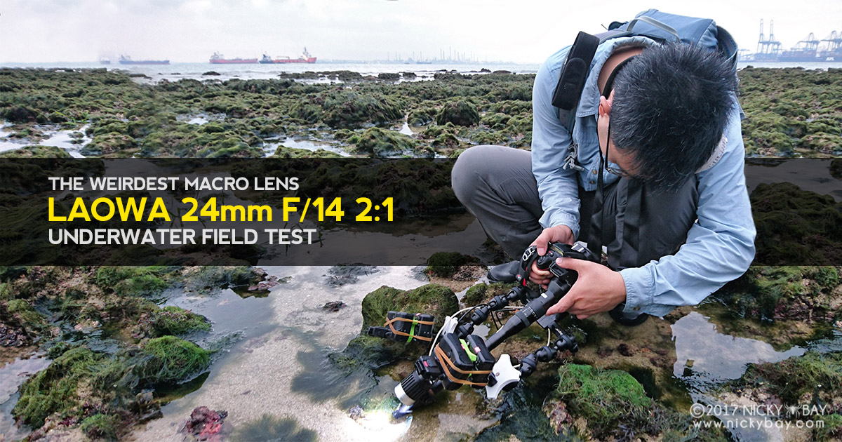 The Weirdest Macro Lens - Laowa 24mm f/14 2:1 Underwater Field Test