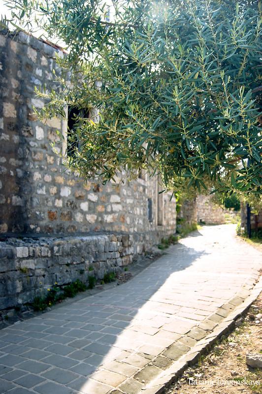 Олива и каменный дом в Старом Улцине