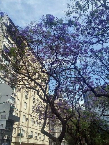 Wandering around Buenos Aires. From Being an Introvert Abroad: 3 Tips for Survival