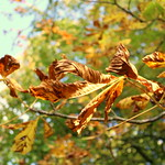 Autumn in Avenham Preston