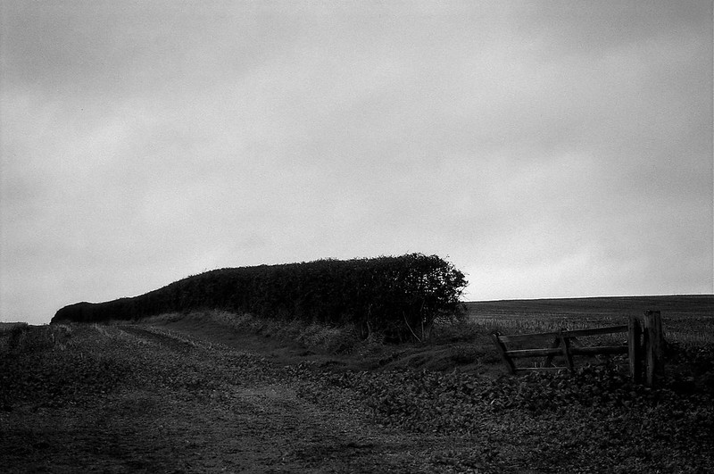 FILM - Hedge and gate