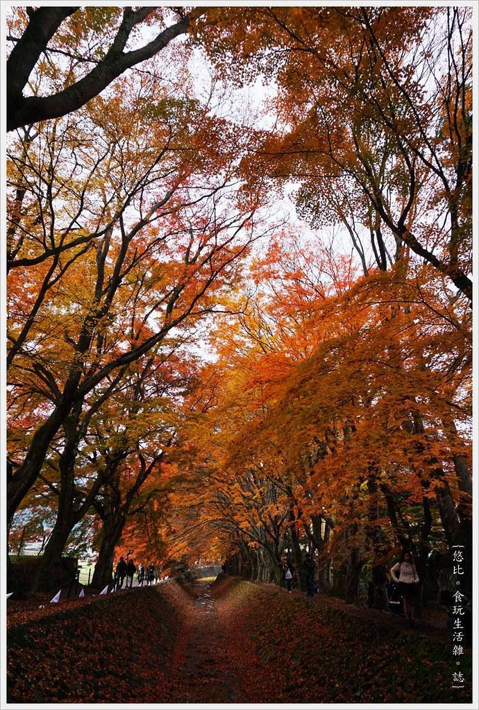 紅葉迴廊-紅葉祭-白天-8
