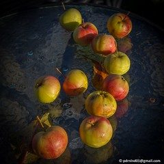2017-10-21 Öjjäälon apples -0002