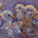 Chicks  10.5 x 7.5 - 2017-Oct-23 DSC_3966.jpg