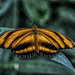 Beautiful Butterflies at the Burger Zoo-2 by Aaron Peterson 20 million views