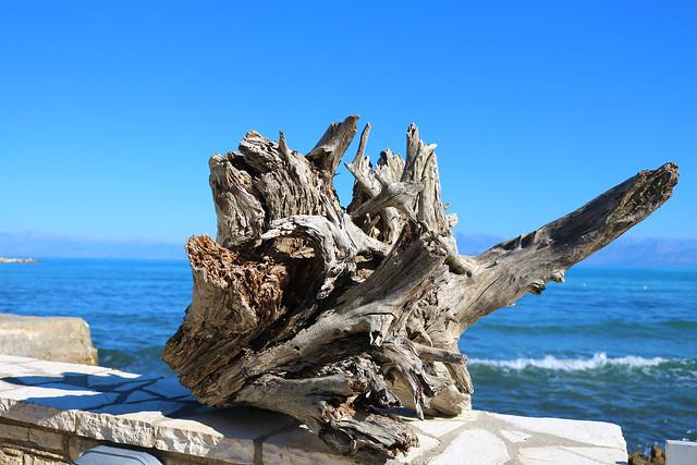 Tree stump next to the ocean