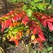 Autumn in my back garden